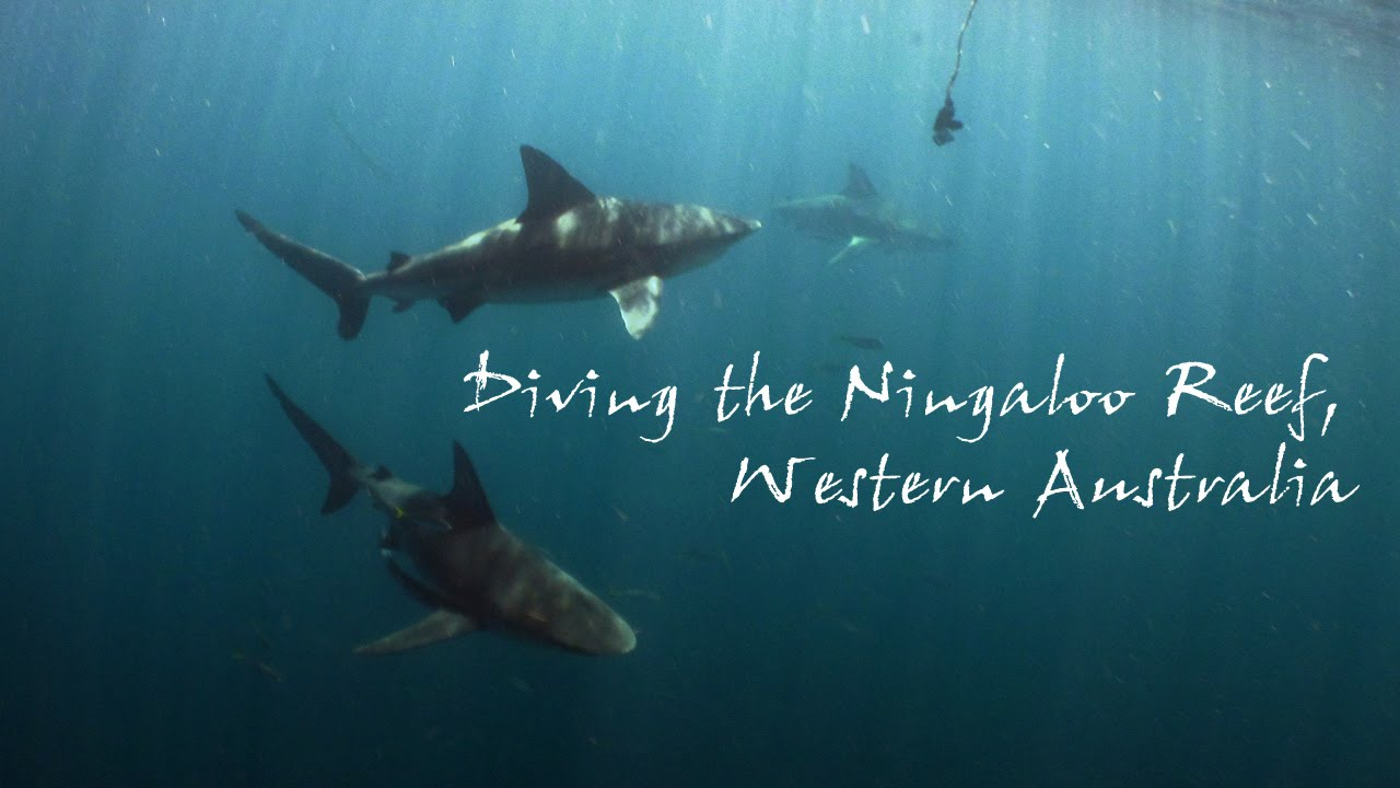Diving the ningaloo reef western australia youtube - Ningaloo reef dive ...