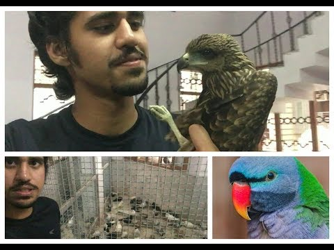 INDIAN BIRD HOSPITAL and REHAB ROUND | Another Kite Resce | Wildly Indian
