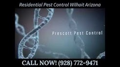 Residential Pest Control Wilhoit Arizona
