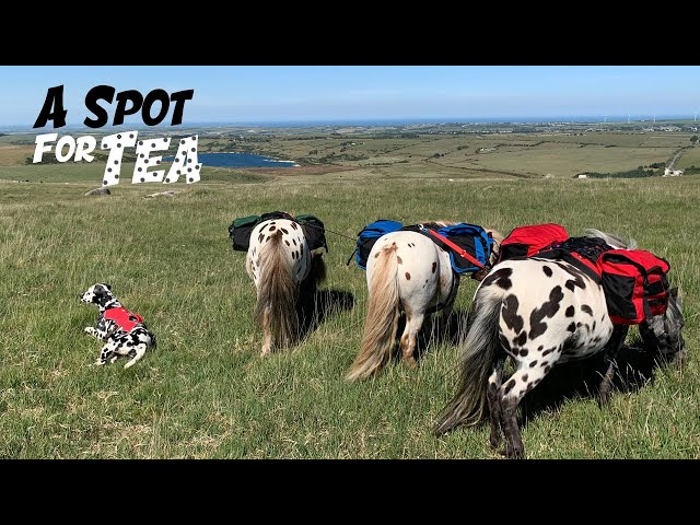 Mini Moorland adventure with all the SPOTTY  horses & Dog!