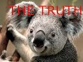 The Truth! Koalas