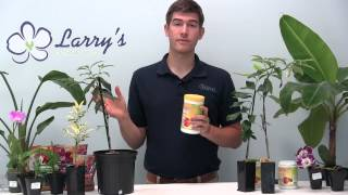 How To Grow a Citrus Tree - Growing Guide