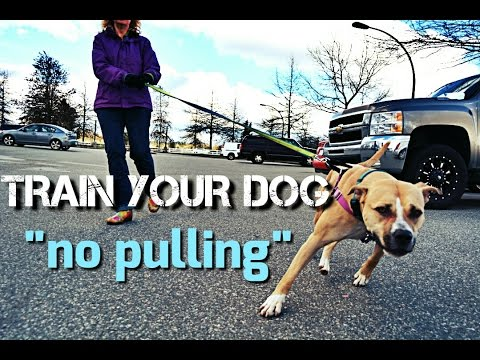 Train Your Dog to NOT PULL on Walks – Loose Leash Walking