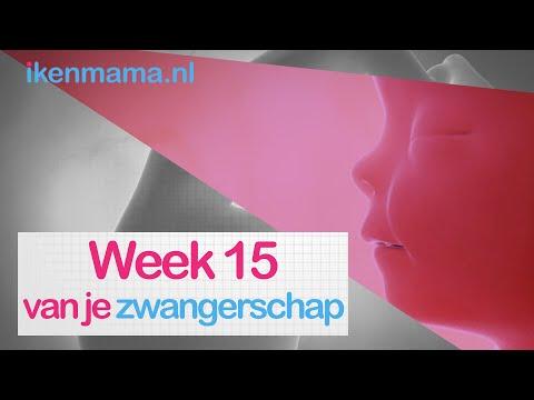 15 Weken Zwanger | Ikenmama.nl