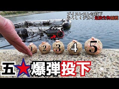 だん5爆弾投下で恐ろしくもドデ怪魚を捕獲する