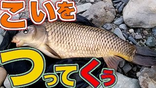鯉を釣って食う river fishing catch eat