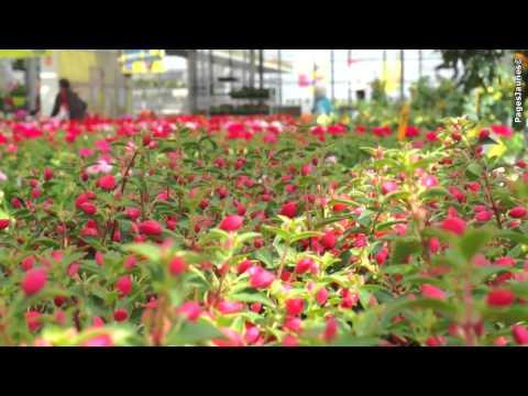 Fleurs Barthel, fleuriste à Dorlisheim dans le département du Bas-Rhin 67