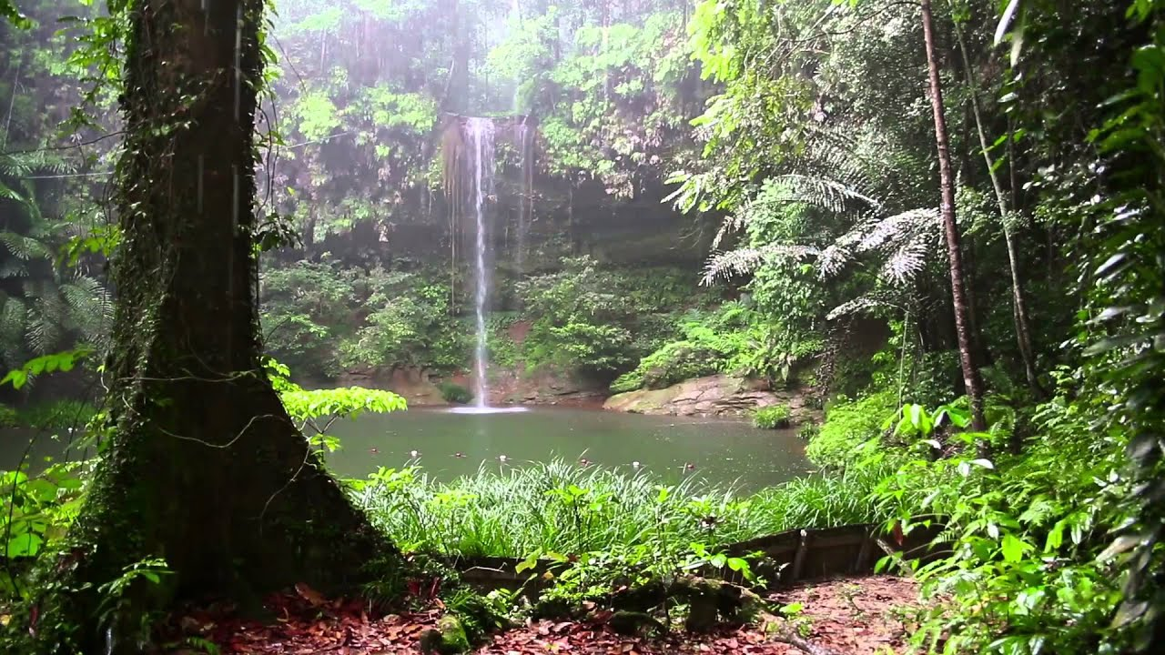 rain sound and rainforest animals sound relaxing sleep youtube