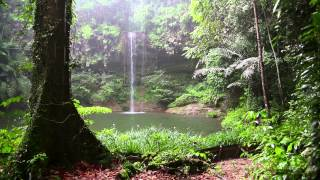 Rain Sound and Rainforest Animals Sound - Relaxing Sleep thumbnail