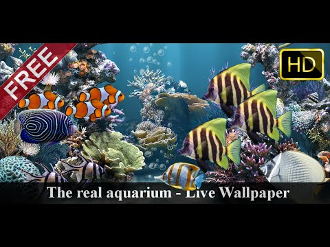 Animated Aquarium Wallpaper The Real Aquarium Hd Live Wallpaper Video Demo Youtube