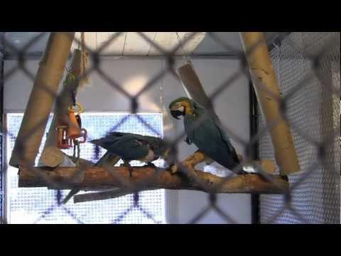 R.I. Sanctuary Not A Parrot Zoo: It's A Tragedy