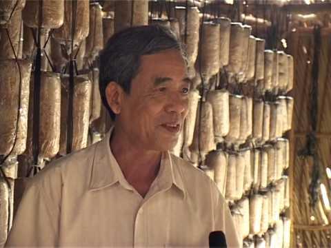 04-2013 - Hiệu quả mô hình trồng nấm