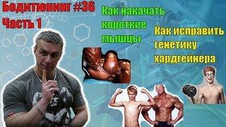 Как накачать короткие мышцы. Борьба с генетикой хардгейнера. Часть 1. Бодитюнинг #36