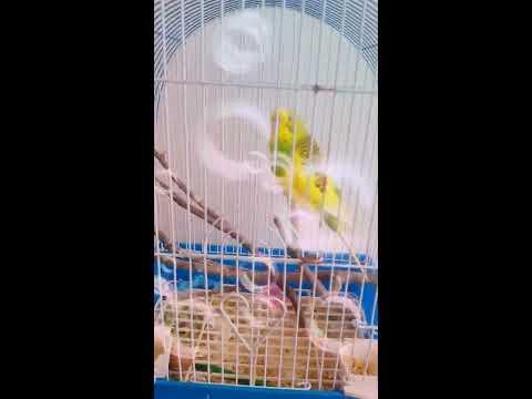 Наше первое знакомство с попугаем Кеа