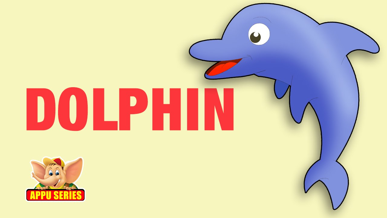 Animal Facts - Dolphin - YouTube - photo#30