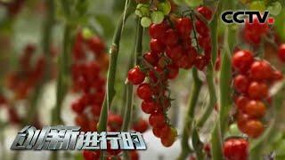 """《创新进行时》 20210105 神奇的""""蔬菜工厂""""  CCTV科教 - YouTube"""