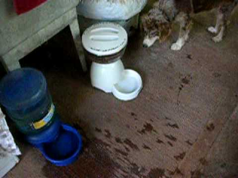 Jewel scared of water feeder