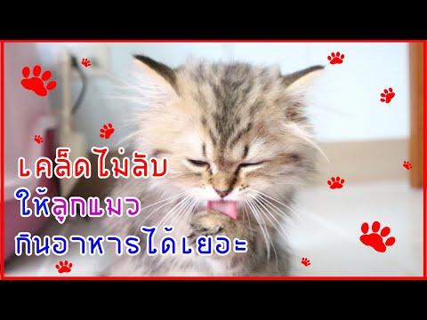 ลูกแมวไม่กินอาหาร กินน้อย (อาหารเม็ด) : AomandTheCaT 5