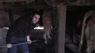 Ganaderos en su habitat | LIMUSINAS EN CABAÑA PASIEGA  | 17.1.2020