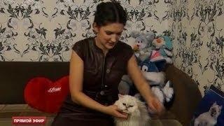 19-летняя кошка из Серова попала в Книгу рекордов