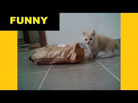 Cat playing with paper bag: funny compilation