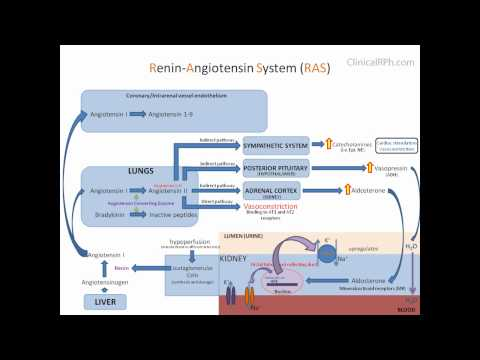 aldosterone and renin relationship test