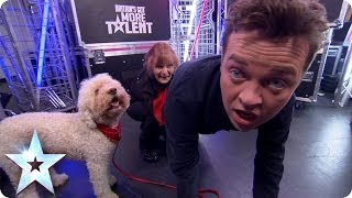 Stephen Mulhern learns a doggy trick   Britain's Got More Talent 2014