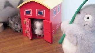 Baby Chinchillas vs. Totoro! (Ep. 2)