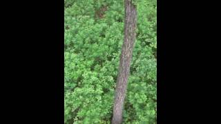 Охота на кабана в Приморье 2016(Приморский край., 2016-07-08T06:44:15.000Z)