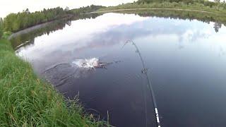 Рыбалка на Утренней Зорьке на Хищника! Окунь и  Щука на Спиннинг!