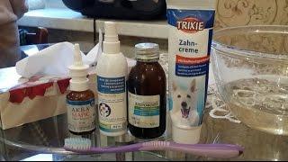 Первая чистка зубов котенка мейн-кун Zeema 4,5 месяца