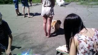 Выставка собак в Енакиево