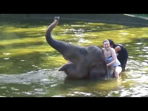 Bathe and Breakfast with The Elephants - Bali Bathing Elephant