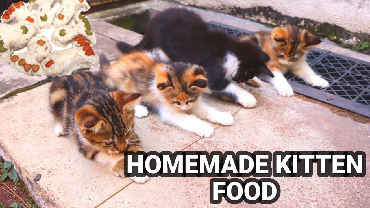 Making Homemade Cat Food For Street