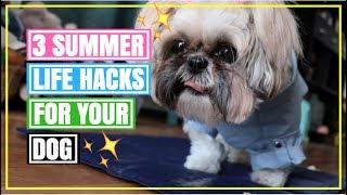 3 summer life hacks for your dog   life hacks for your dog
