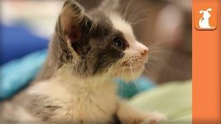 Amazing Adorable Kittens! (Cute Compilation)  Kitten Love