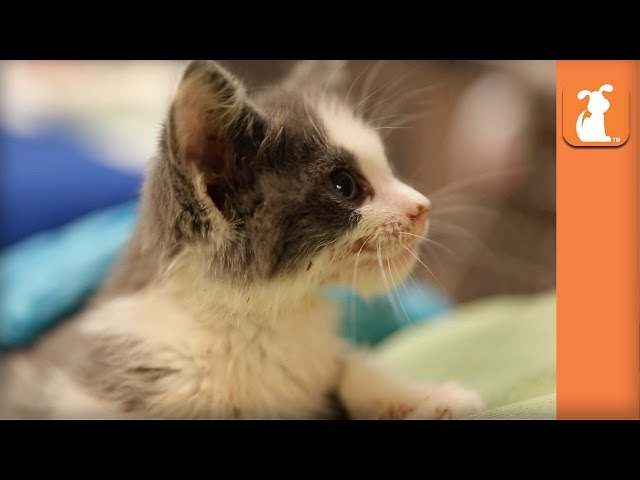 Amazing Adorable Kittens! (Cute Compilation) - Kitten Love