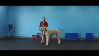Best Dog Training in Columbus, Ohio! 9 Month Old Irish Wolfhound, Monty!