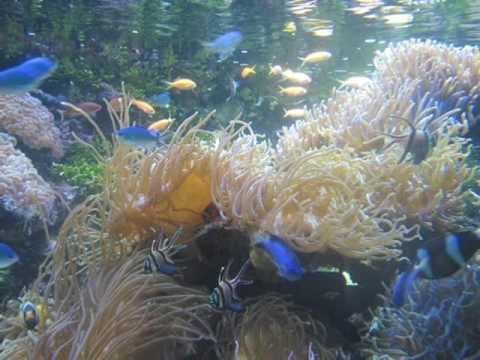 Sea Life Sydney Aquarium -  Attractions Photos &  Reviews  Activities And Reviews.