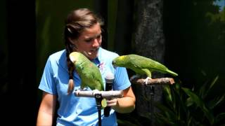 Singing and talking parrots