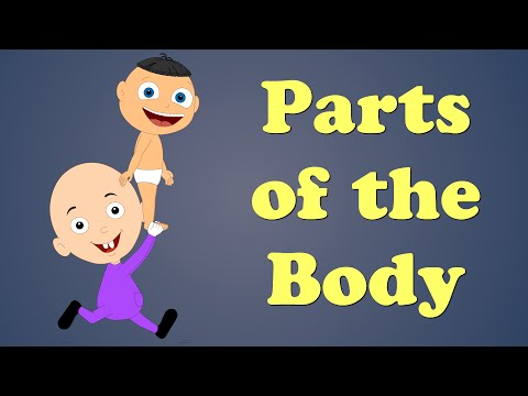 Parts of the Body for Kids
