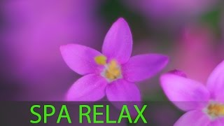 6 Hour Relaxing Spa Music: Massage Music, Calmi...