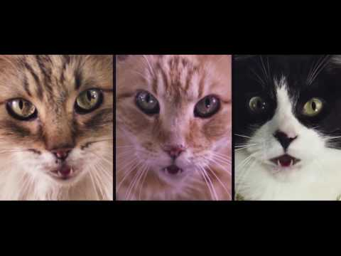 Meow Mix Song
