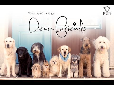 「Dear Friends 」 Dog Short Film
