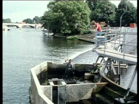 Salmon Fishing - Return of the Thames Salmon