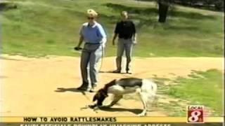 Rattlesnake Avoidance Training