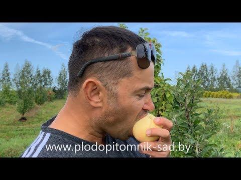 Вопрос: Как понять по вкусу какой сорт яблок?