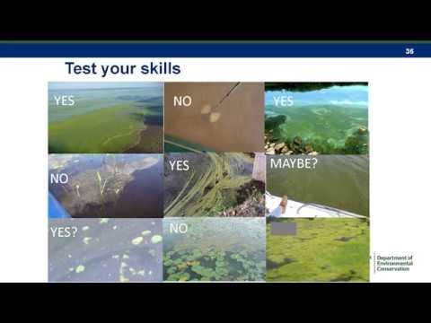 Harmful Algal Bloom (HAB) Identification: Tips And Tricks