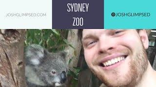 I meet Koala's Kangaroo's Emu's & Quokka's at Sydney Zoo // Australian Animals