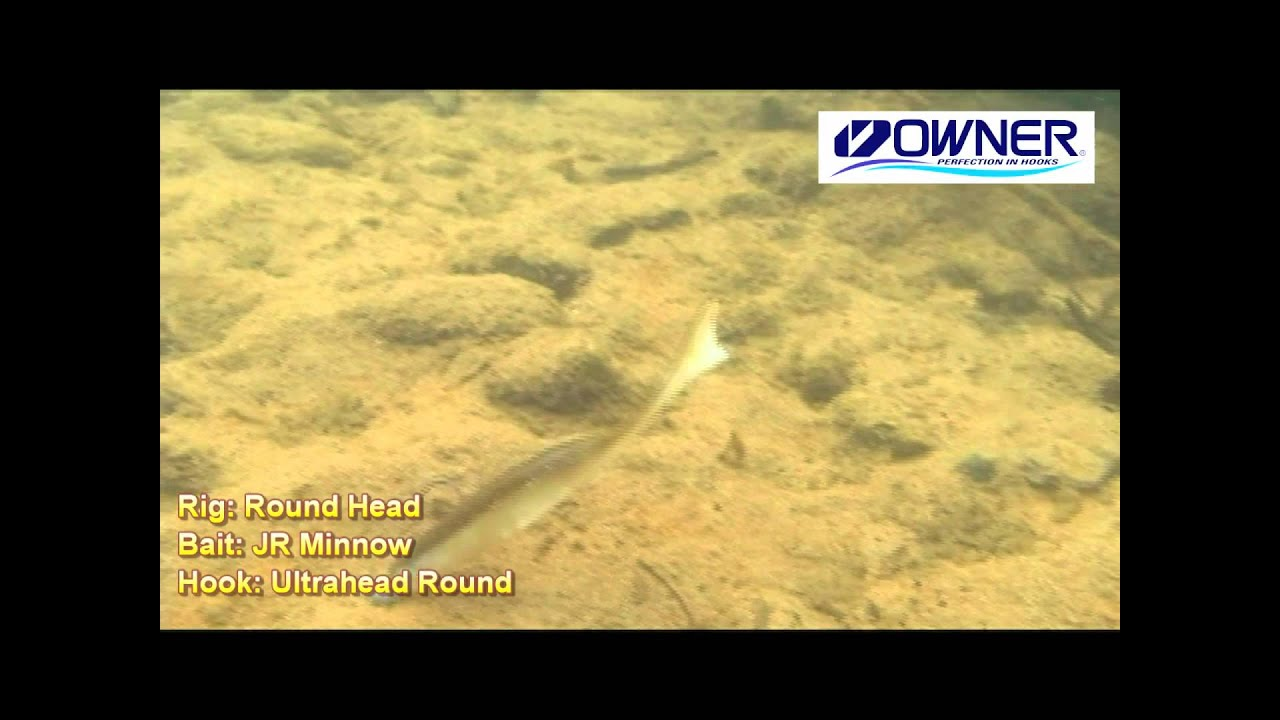 jr minnow - owner softbaits by owner - youtube, Soft Baits